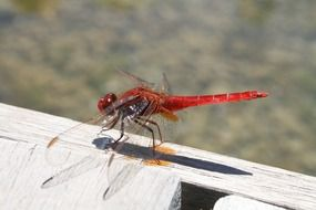 red dragonfly on a wooden fence close-up