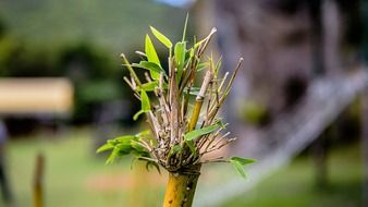 Picture of bamboo plants