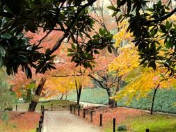 multicolored autumn trees in a park in Okayama, Japan