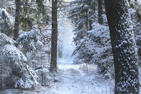 mysterious snowy forest
