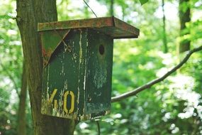 bird feeder in the forest