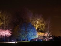 colorful illumination of trees in a park in England