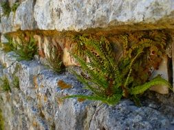 picture of fern on a wall