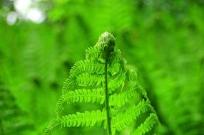 leaf fern closeup