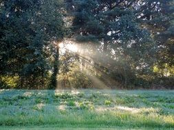 sun rays through the trees on a green meadow