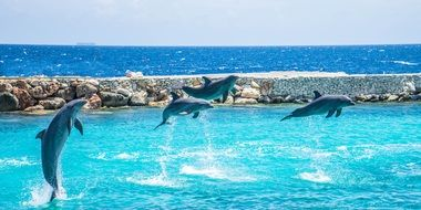 flock of jumping dolphins