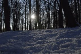snow forest sun in branches evening view