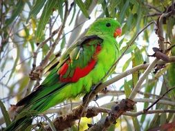 bright green parrot on a tree branch