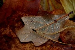 Water drops on the leaf in autumn