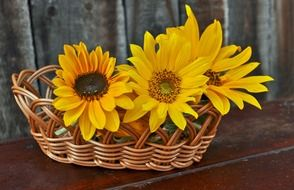 yellow sunflowers plant basket