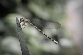dragonfly with transparent wings on a plant close up