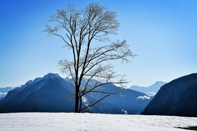 bared tree winter snow sky landscape