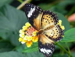 exotic butterfly in wildlife