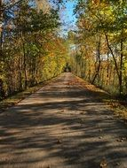 asphalt trail among autumn trees