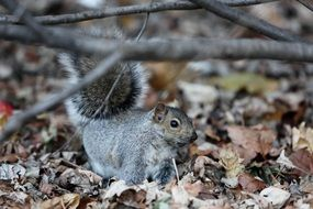 squirrel in an autumn forest