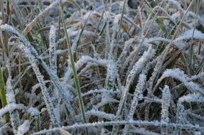 long grass in frost