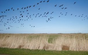 Migratory birds in nature