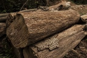 wood logs as timber