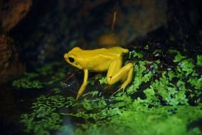 yellow frog in wildlife
