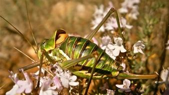 insect grasshopper forest nature