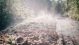 forest soil in the morning