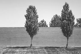 trees in front of fence black and white