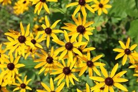 Picture of yellow wildflowers