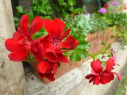 red flowers like garden plants