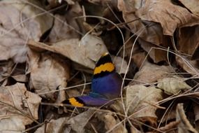 Beautiful and colorful butterfly on the leaves