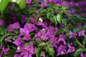 bright purple garden flowers