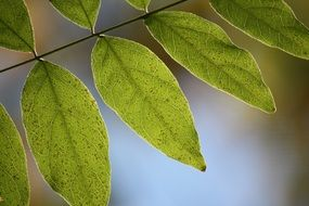 Macro photo of the green leaves