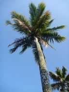 tropical palm tree on the blue sky