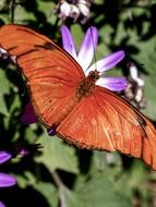 beautiful orange butterfly on flower close-up