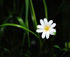 bright white flower in the forest