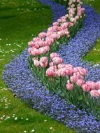 patterns of tulips and blue colors in the park