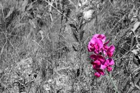 pink wild flower and black and white floral