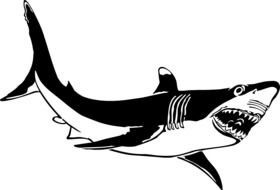 Black and white picture of a shark