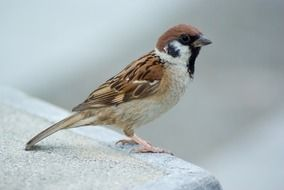 tree sparrow outside