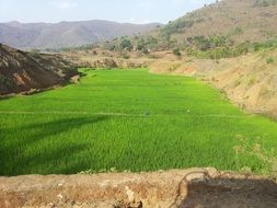 rice paddy in mountain valley
