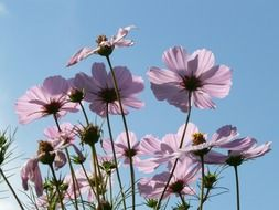 light pink flowers against a clear sky