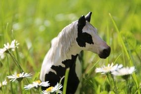 spotted pony among tall green grass