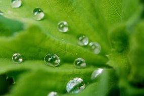 raindrops on a green leaf close up