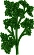 parsley as a graphic illustration