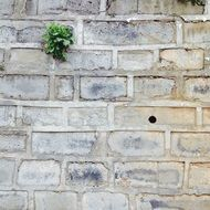 plant on a white brick wall