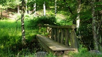 old wooden bridge in the green forest