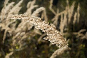 wild grass in autumn