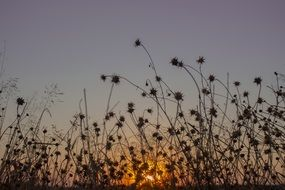 meadow sunset