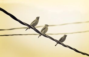 birds perched on cable
