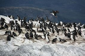 Picture of the penguins in the wildlife
