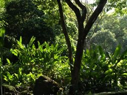 green tropical jungles
